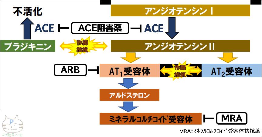 ACE阻害薬 ARB 作用機序 ぷーオリジナル