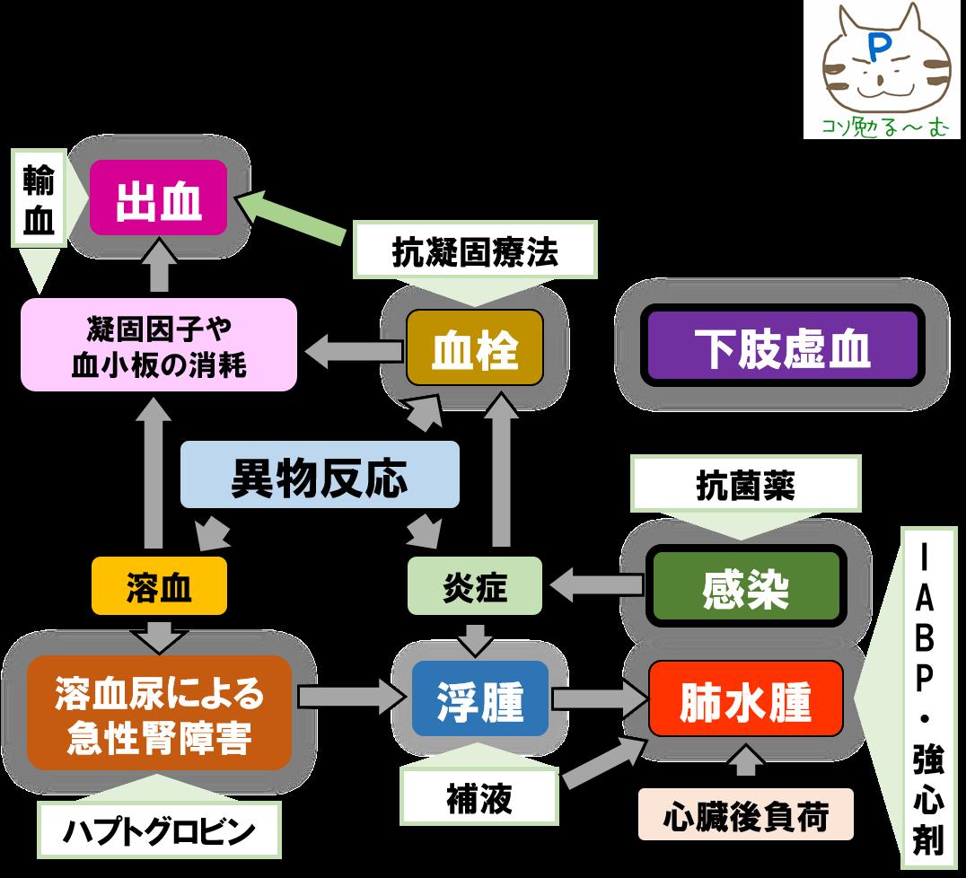 ECMOの合併症と対応 ぷーオリジナル